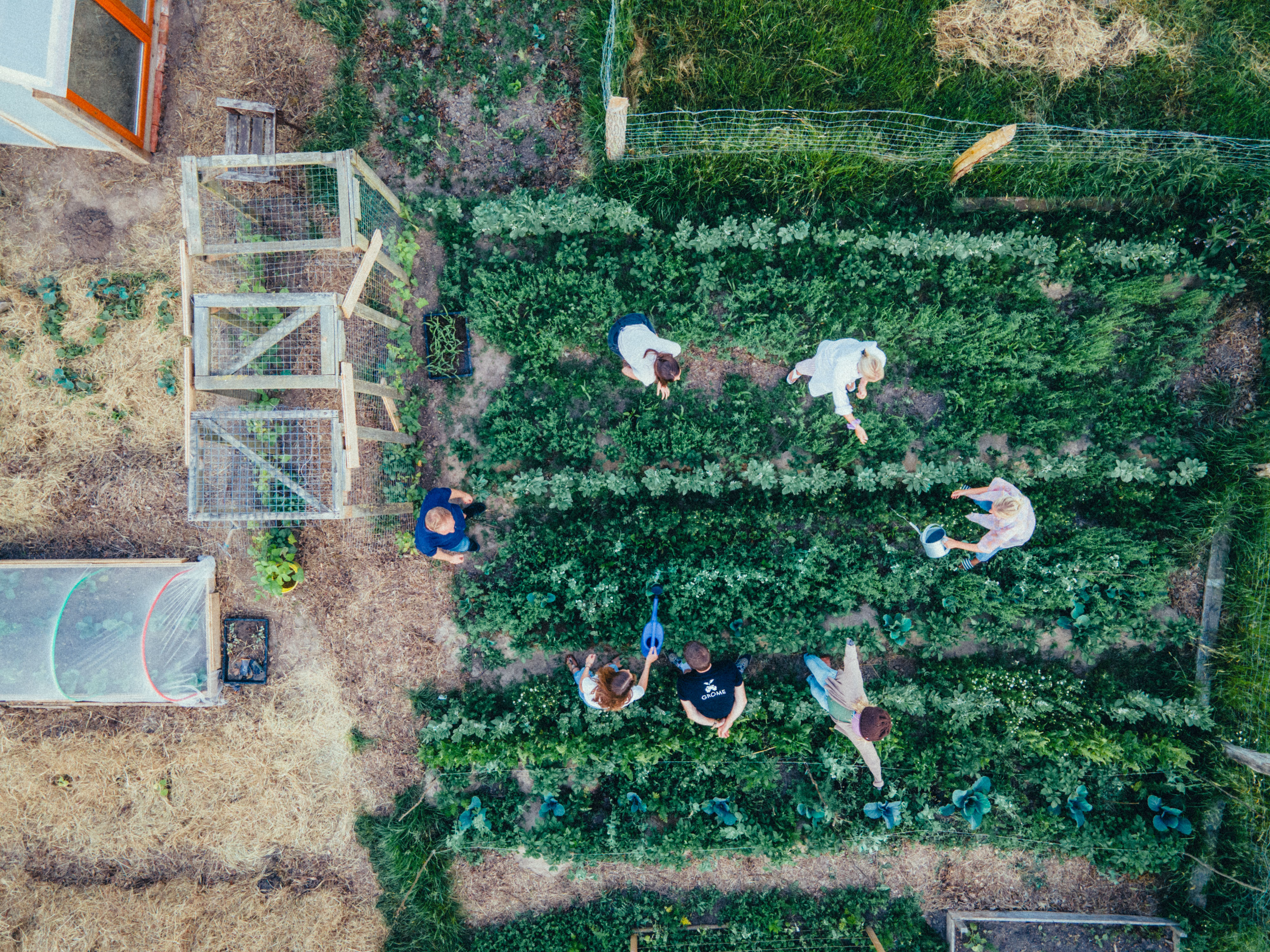 Aerial view of people in circle watering the garden