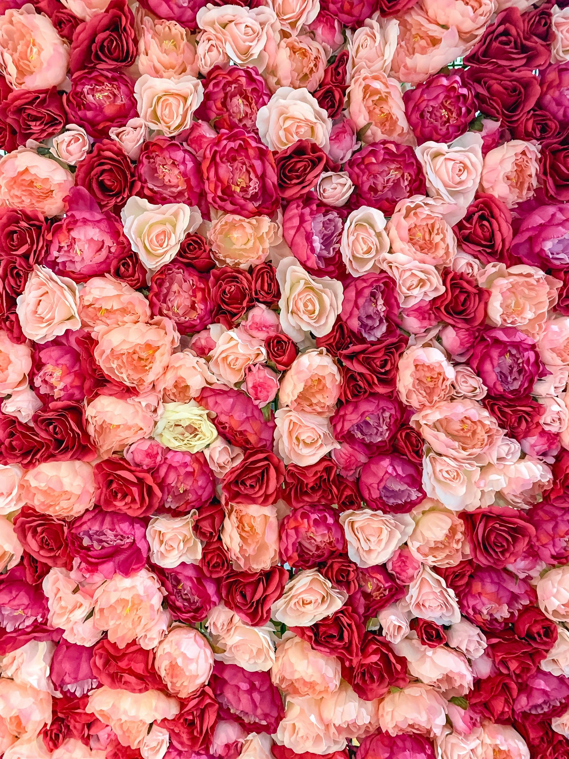 Star Tenöre mit Rosen zum Frauentag