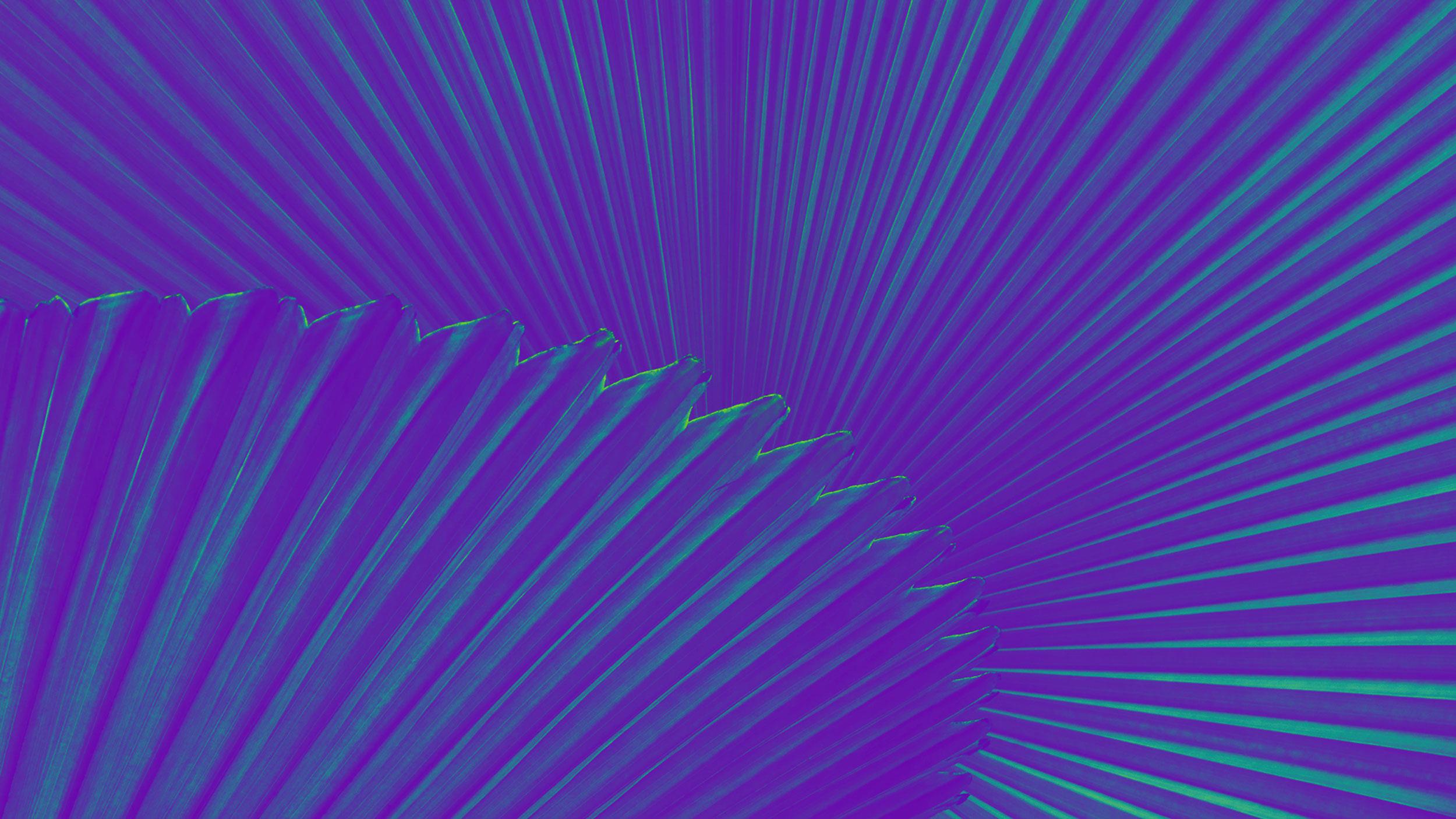 purple-pal-background