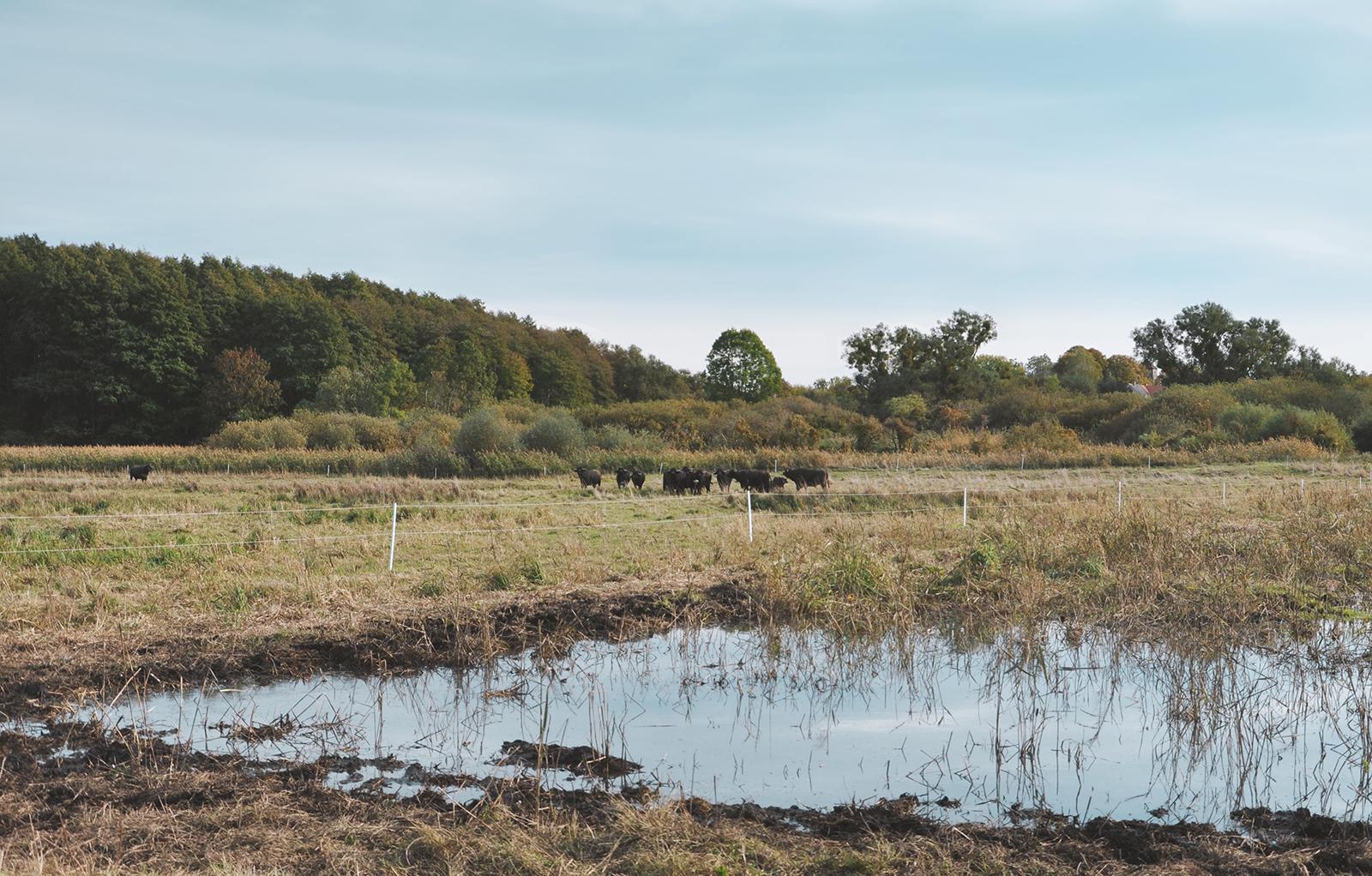 Blick über den Sernitzmoor, wo die Initiative toMOORow sich um die Wiedervernässung der Flächen kümmert