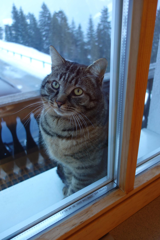 Kater Olaf schaut beim Fenster herein.