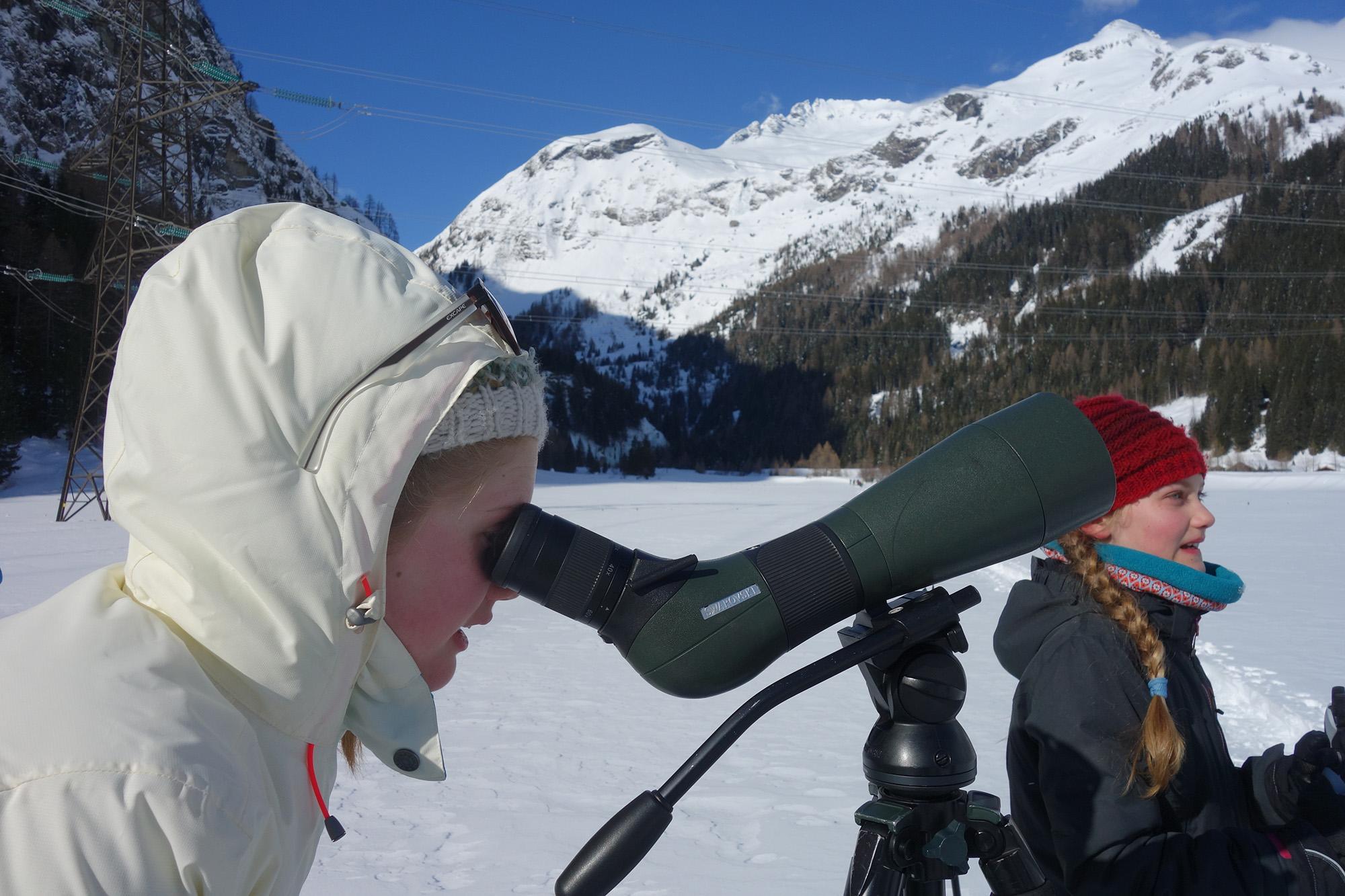 Wildtiere im Nationalpark Hohe Tauern beobachten.
