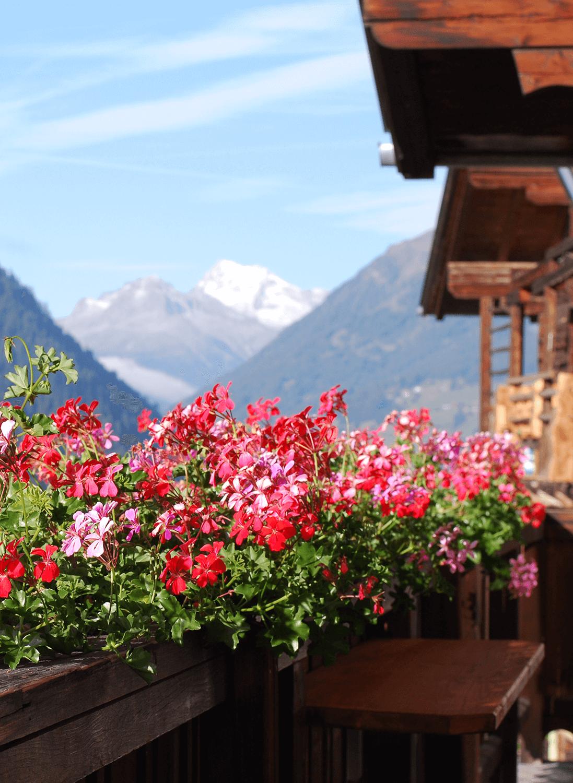 Blumen auf unserem Südbalkon mit Aussicht auf die Berge.