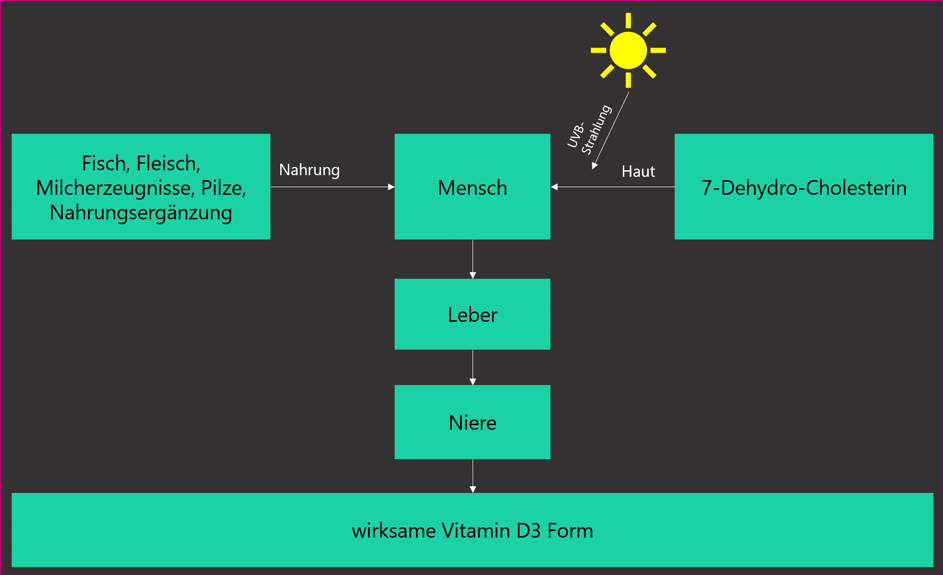 vitamin-d-herstellung-synthese