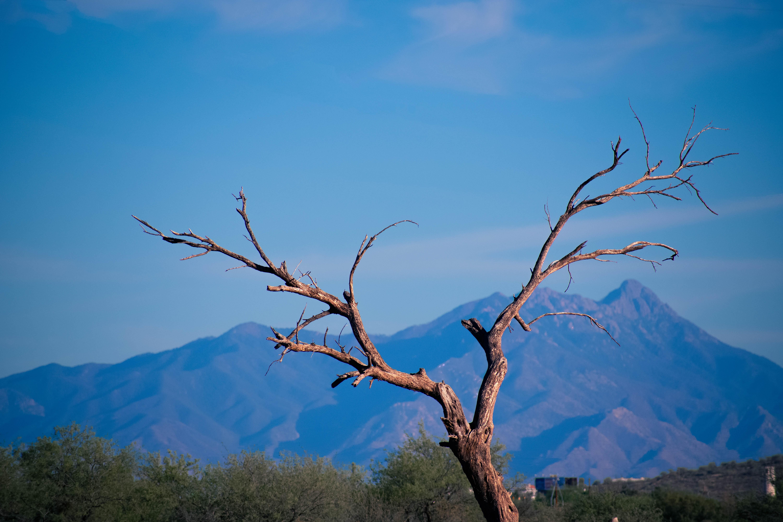 a desert scene from outside of tucson arizona