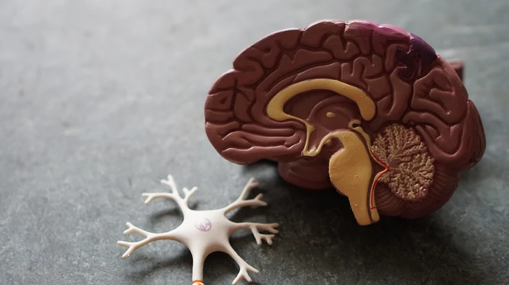 Learn About the Brain, Dementia and Driving