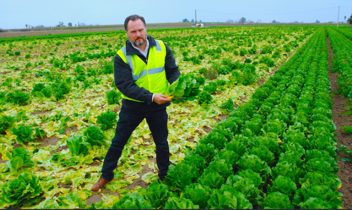 6 effects of lettuce to help cure diseases are extremely economical and effective