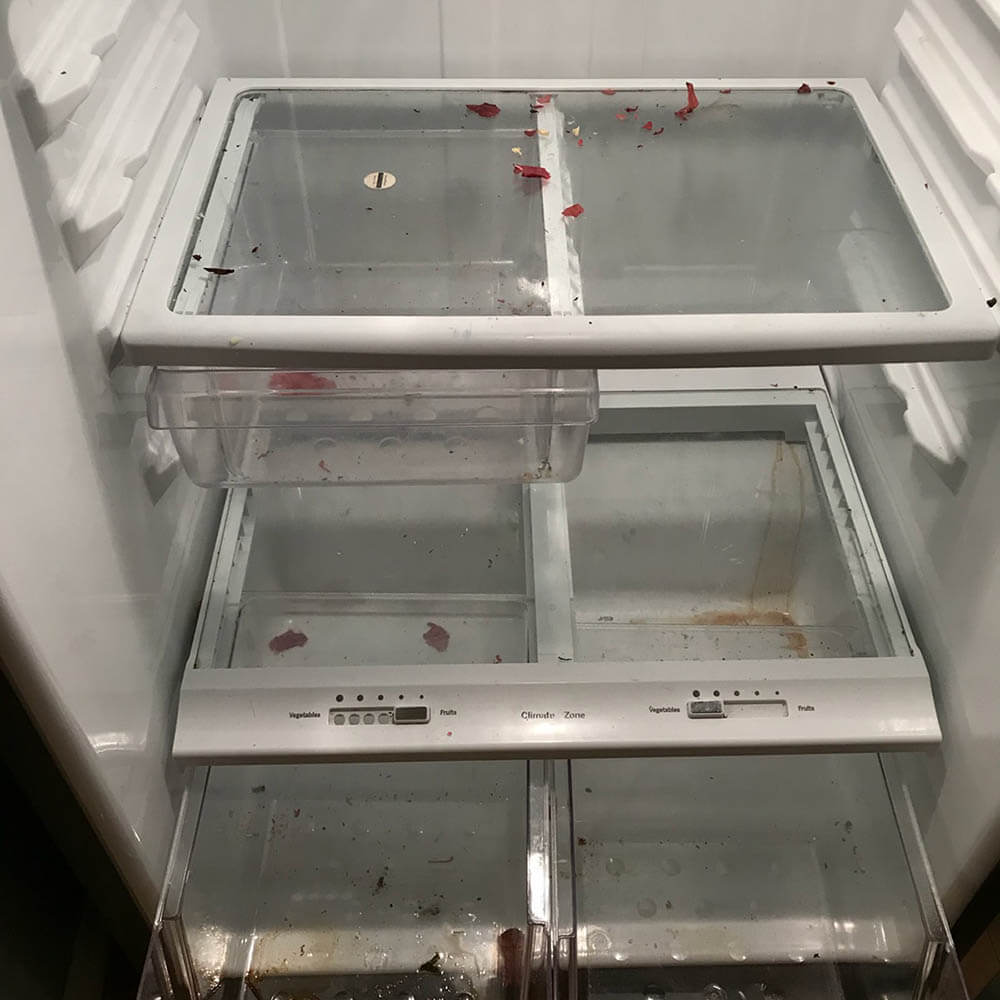 Refrigerator and carpet cleaning