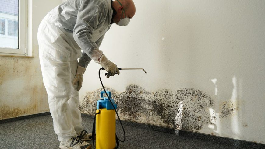 How to Get Rid of Mold in the House: A Step by Step Guide