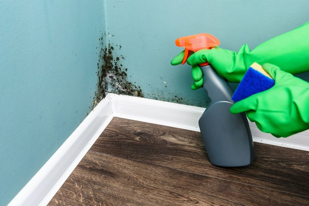 Mold Removal Safety Precautions