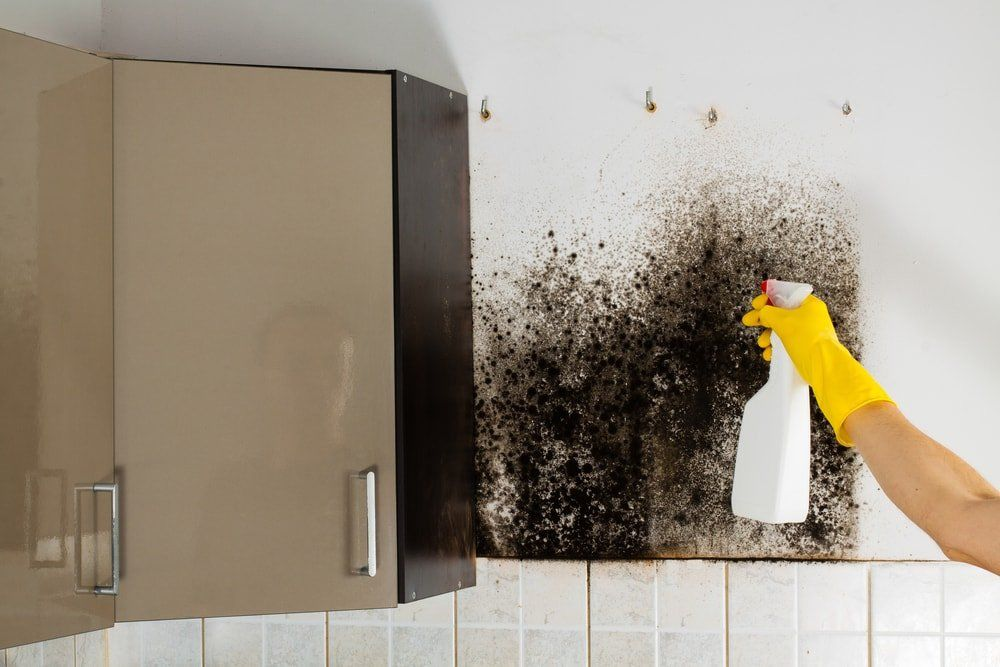 House Cleaning mold removal