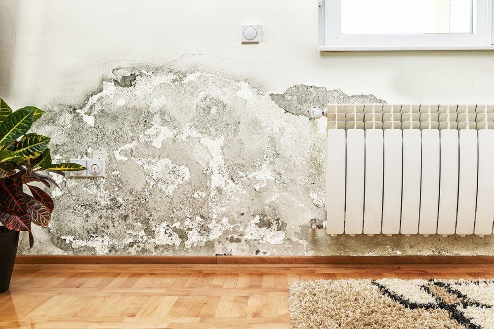 Removing mold by house cleaning company