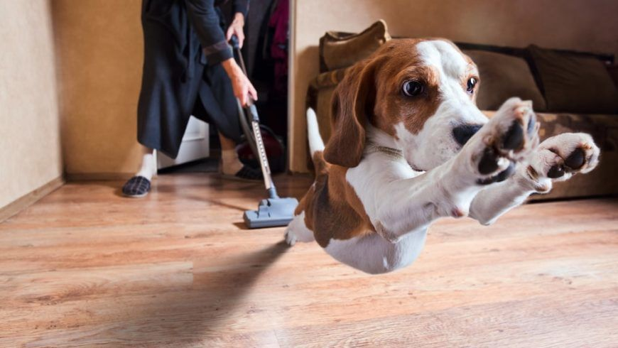 Nipping Pet Odors in the Bud – Maid Service Recommendations