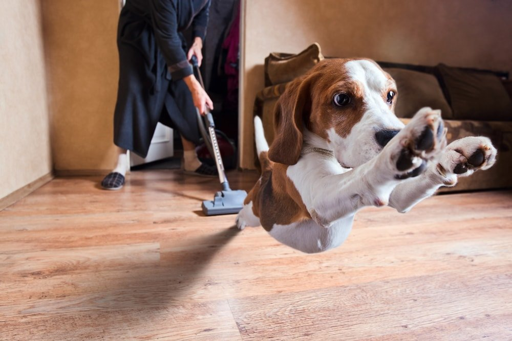 Cleaning Pet Oddors