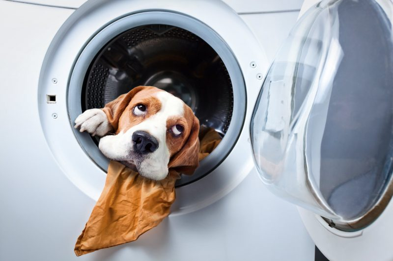 How to get out pet odors when cleaning your house