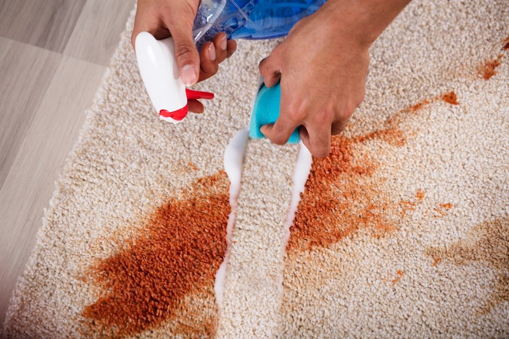 Carpet Cleaning Service Euro Maids