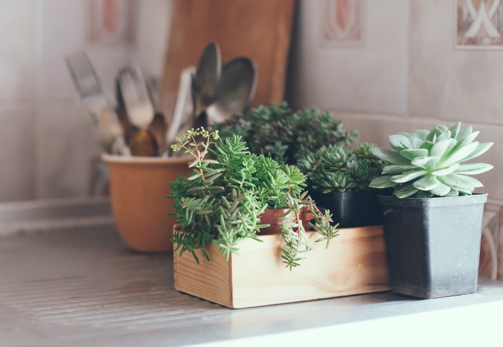 Plants to Improve Your Home