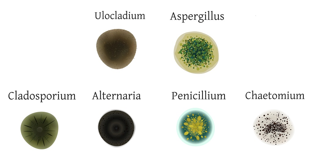 12 Different Types of Mold Found in Houses