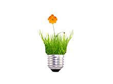 Orange Flower Bulbs