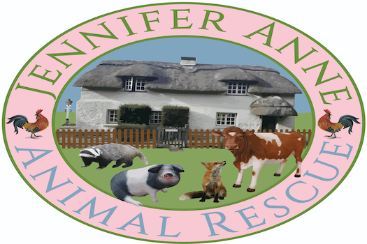 Jennifer Anne Animal Rescue is the current charity reciving Digital Marketing Services from Break the Mould Marketing