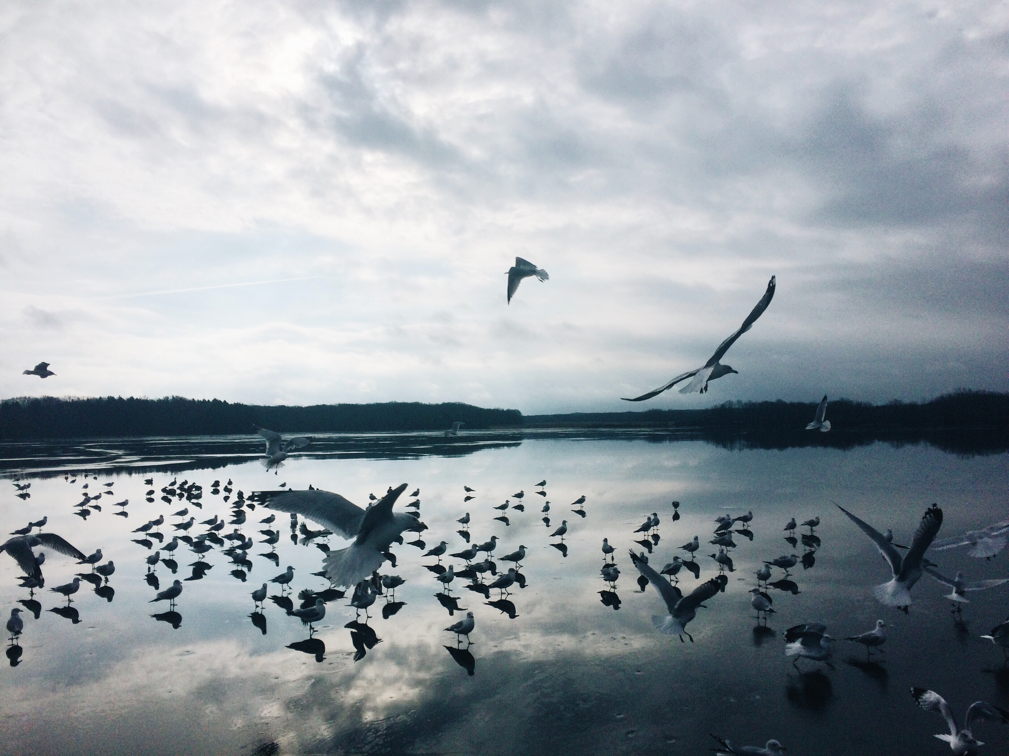 Photo - Seagulls flying on Lake Erie