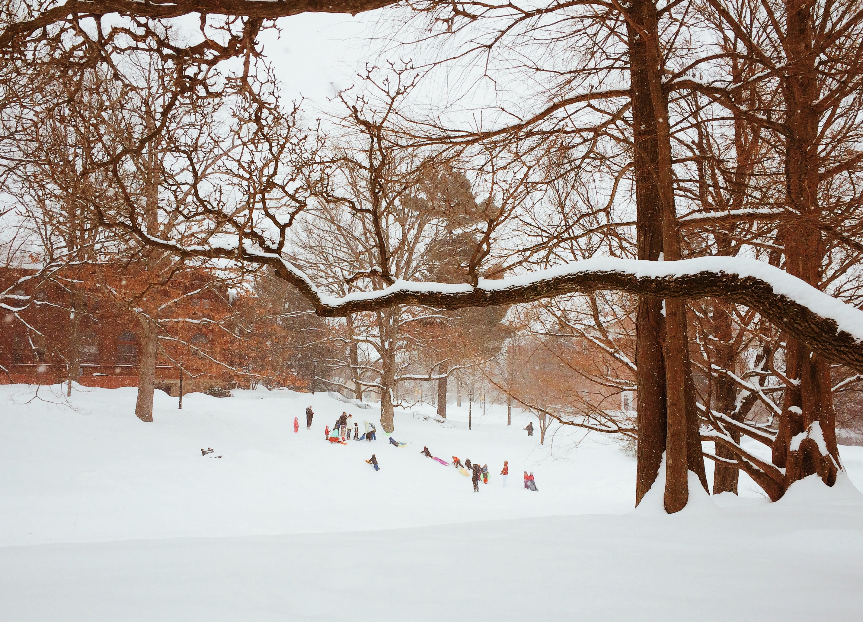 Photo - kids playing on the hill in Meadville