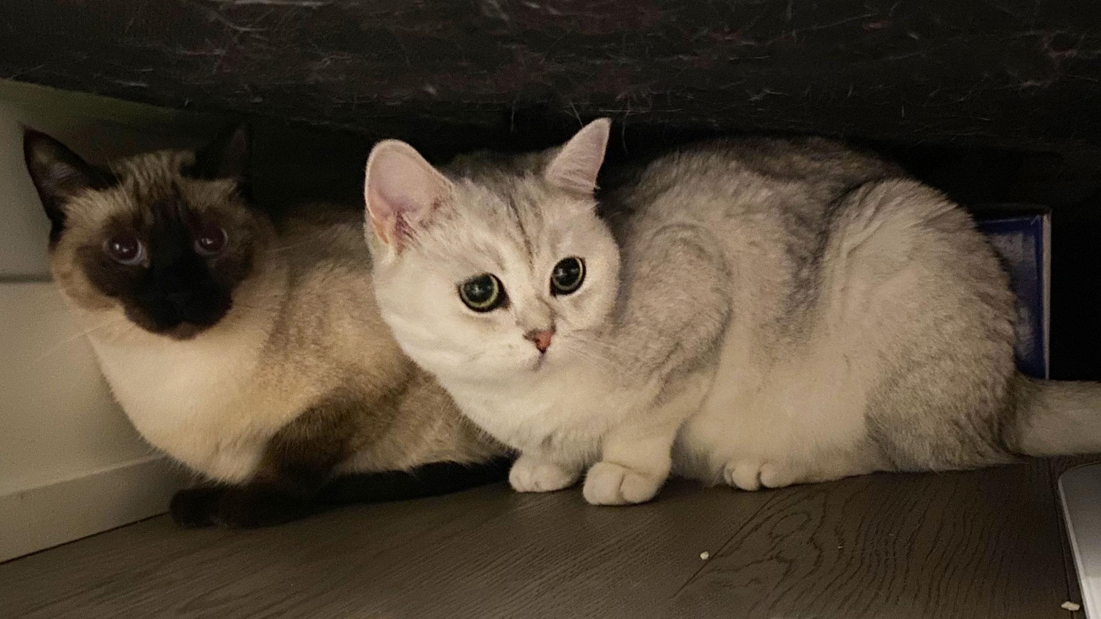 Photo - 2 cats