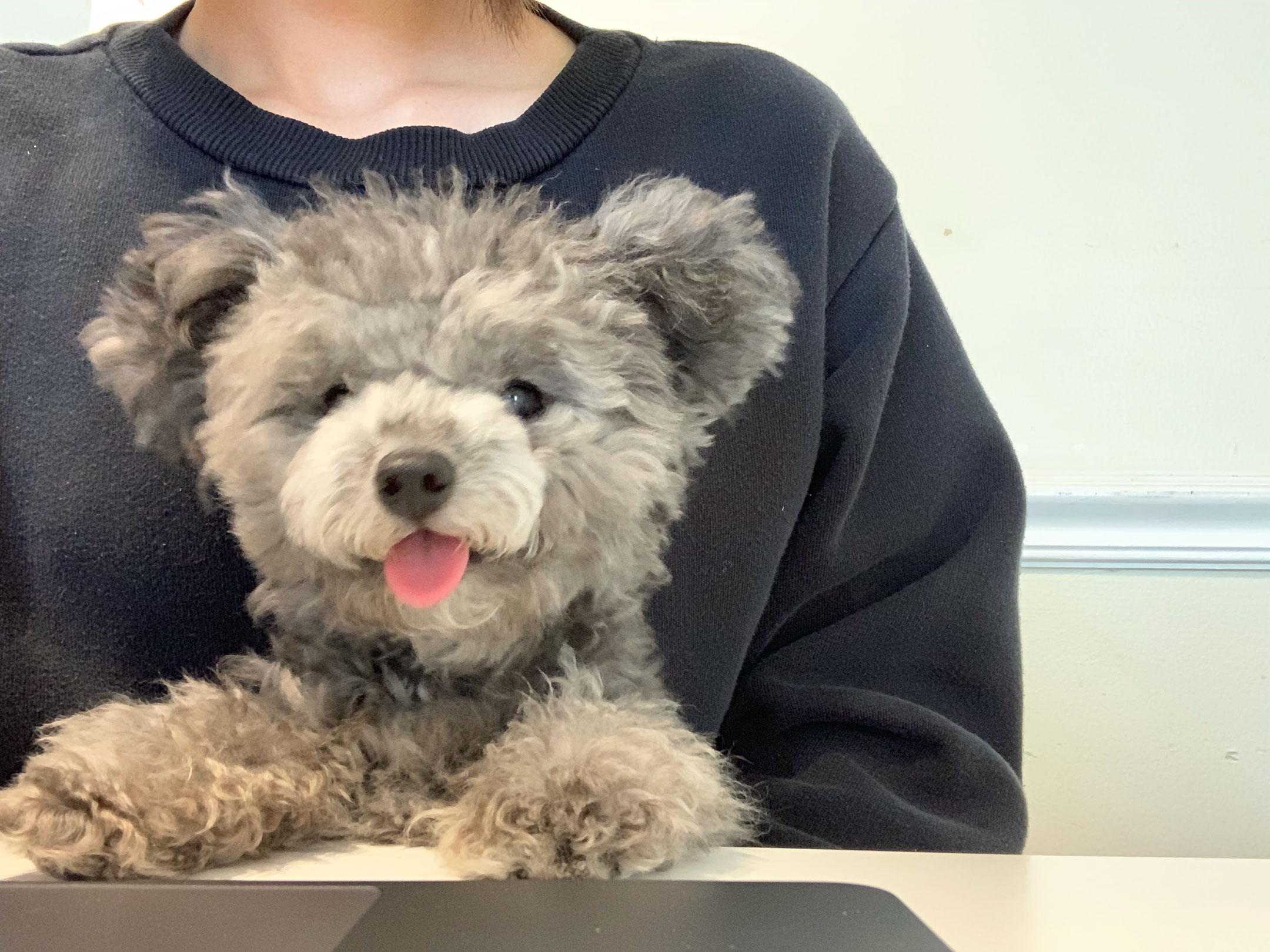 Photo - Teddy bear