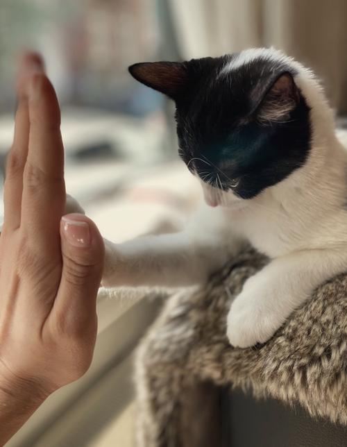 CDVET Animais e Seres Humanos