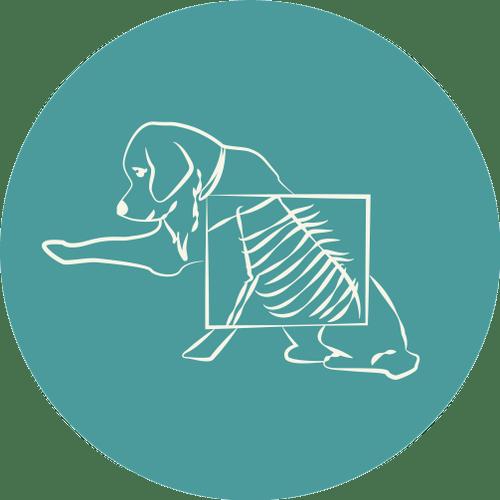 CDVETMaringa_Radiologia