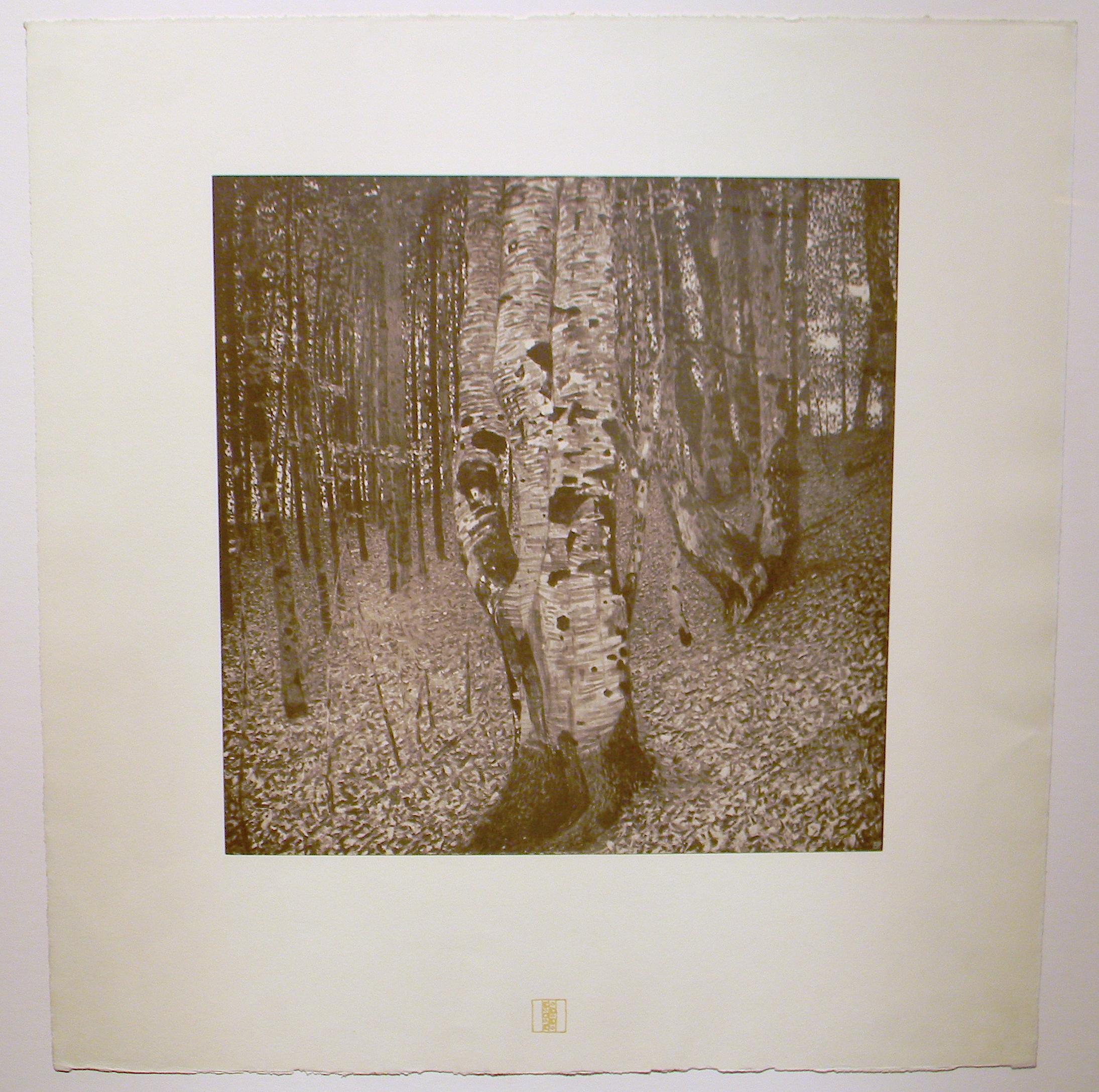 Klimt, Birch Forest 2