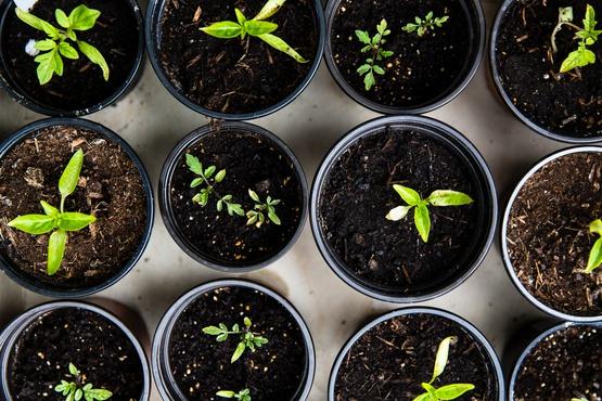 flower pots plant