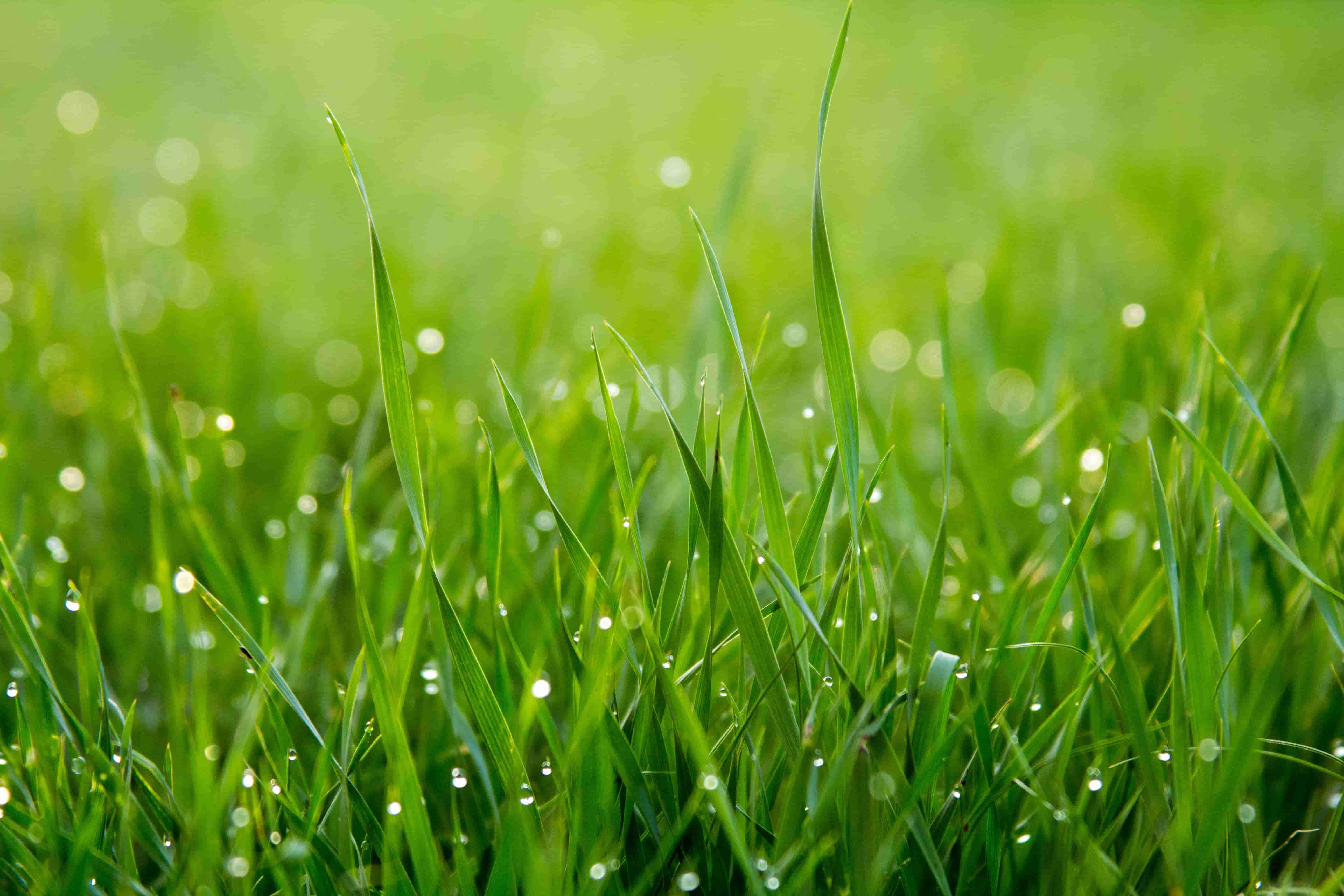 10 of the Best (and Easiest) Organic Lawn Care Tips
