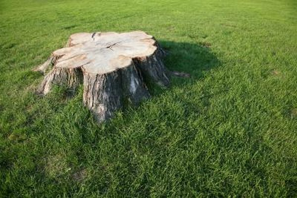 3 Ways To Remove Tree Stumps On Your Own