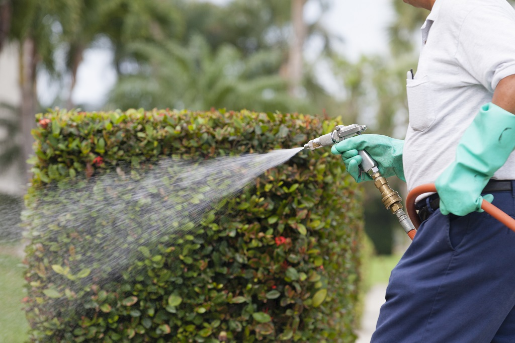 Insect Prevention Landscape Contractor