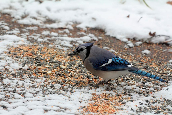 Birdseed for Snow Removal
