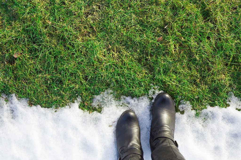 5 Tips on How to Protect Your Lawn From Salt Damage in 2021