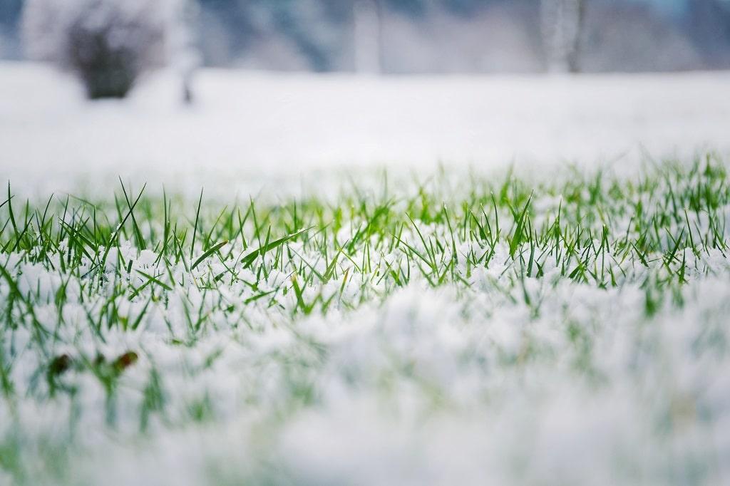 Prevent Salt Damage Lawn