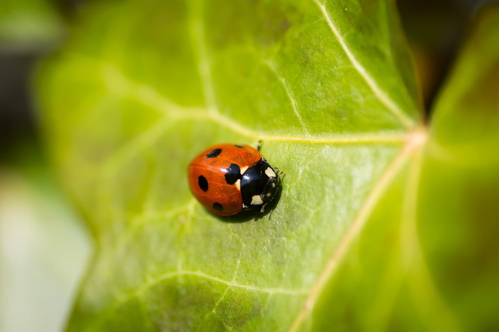 Top 6 Reasons Why You Should Have Lawn Pest Control