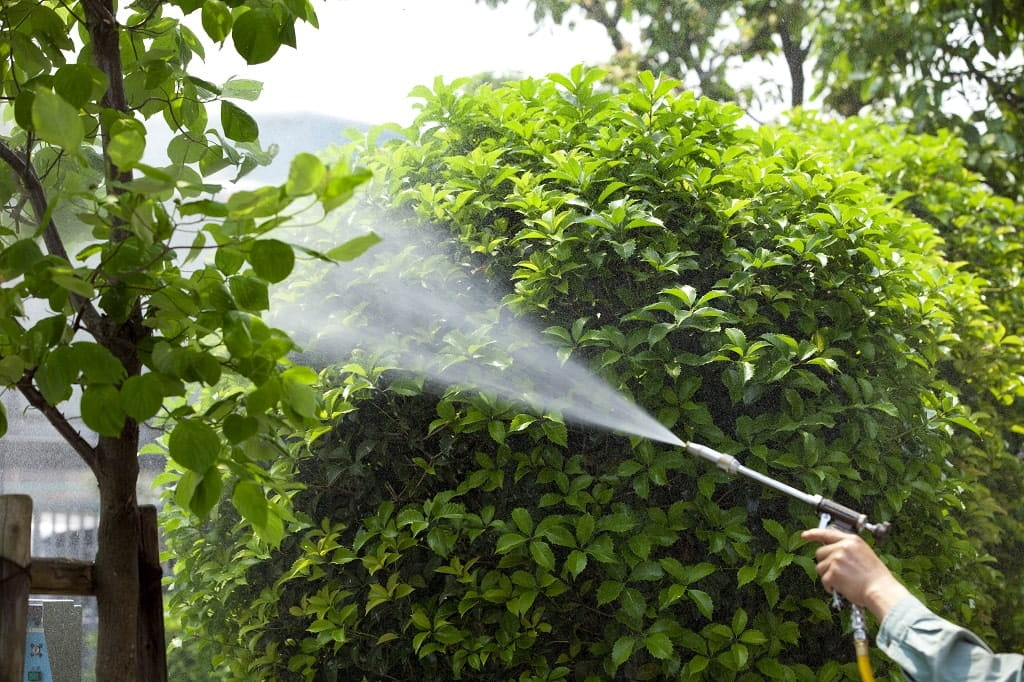 Why Pest Control Is So Important