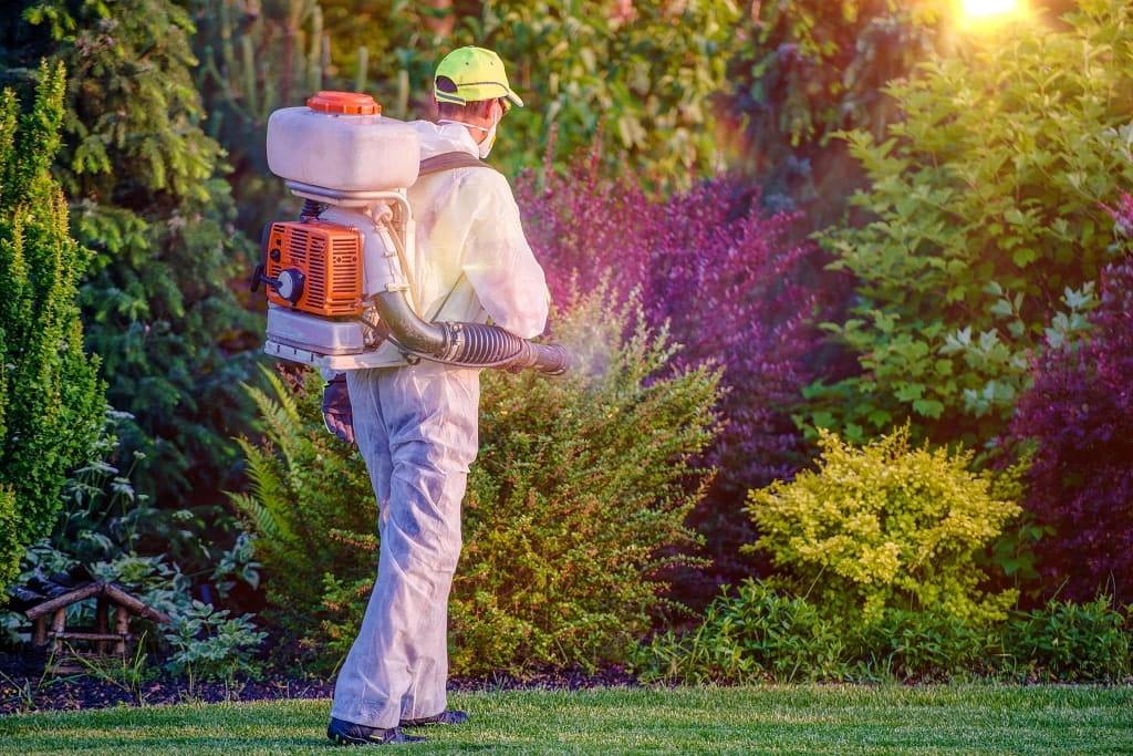 Lawn Pest Control Reasons