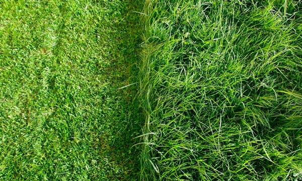 Lawn Maintaining Against Mosquitoes