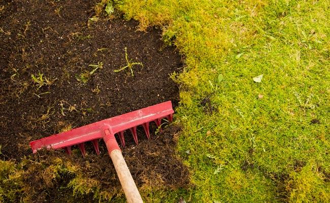 lawn moss lawn care