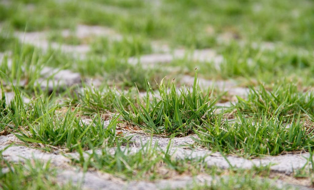 patchy grass lawn care