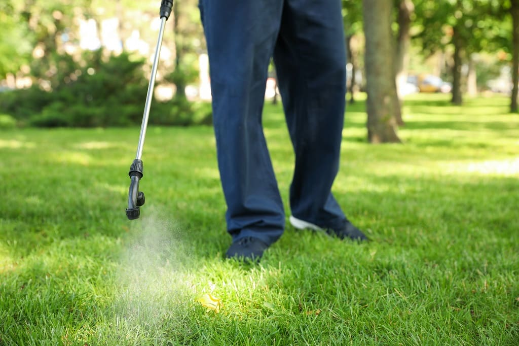 lawn care insects