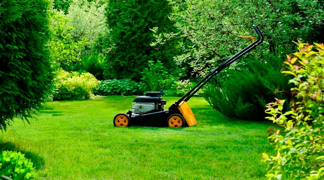 Top 5 Common Lawn Problems: How to Identify and Fix?