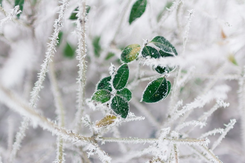 Top 3 Causes of Damage to Trees and Shrubs in Winter