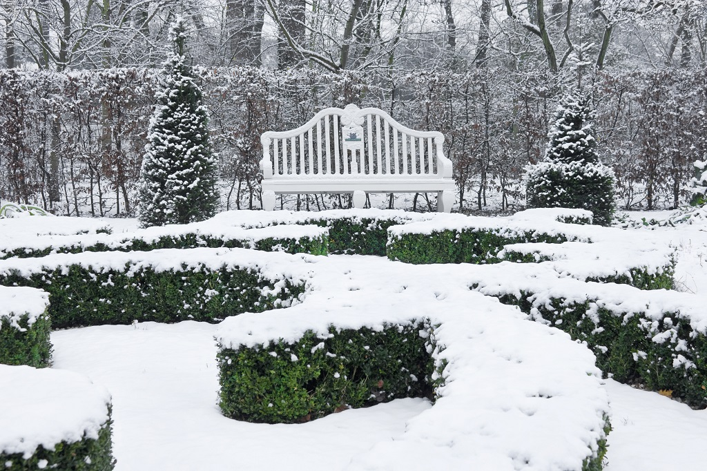 Treeas and Shrubs Winter Damage