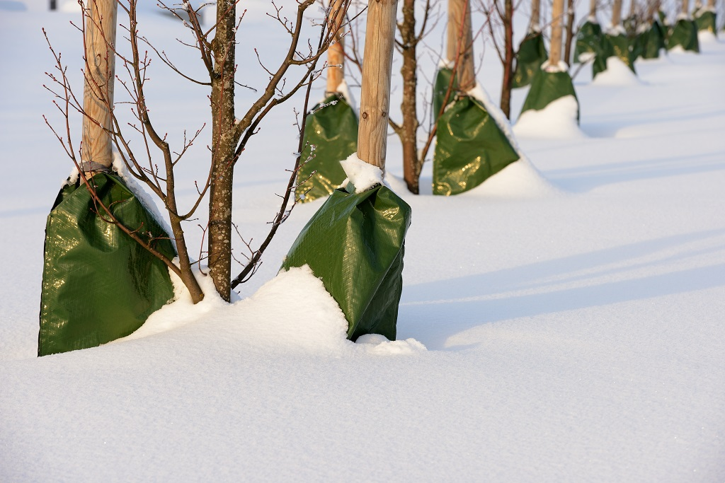 Damage Trees and Shrubs in Winter