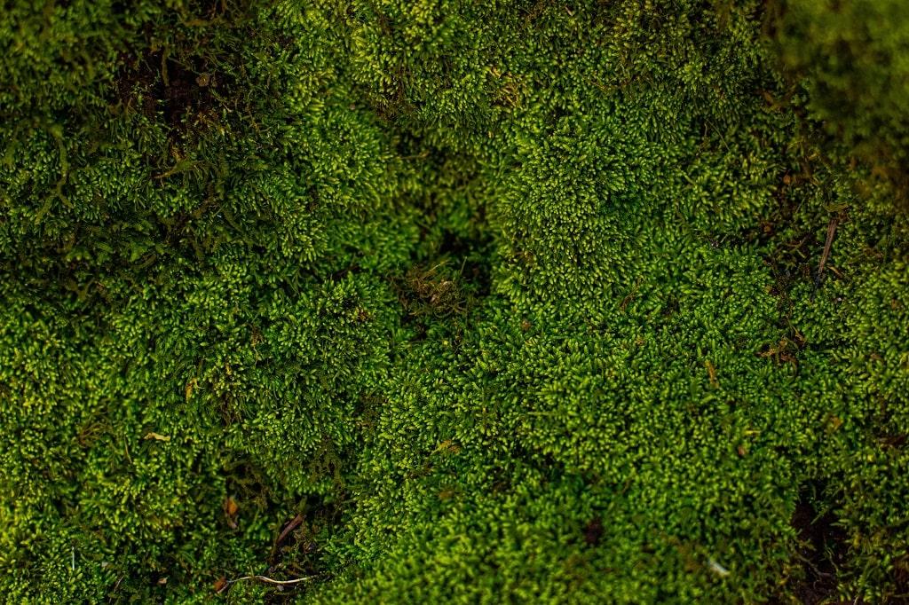 Moss Backyard
